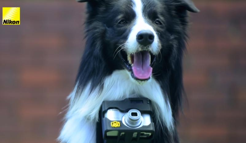 Dog with camera