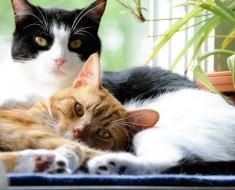 Retirement Cats