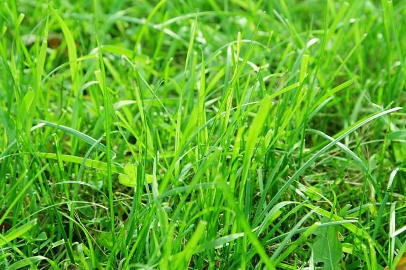 overgrown grass